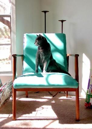 Calendar Cat